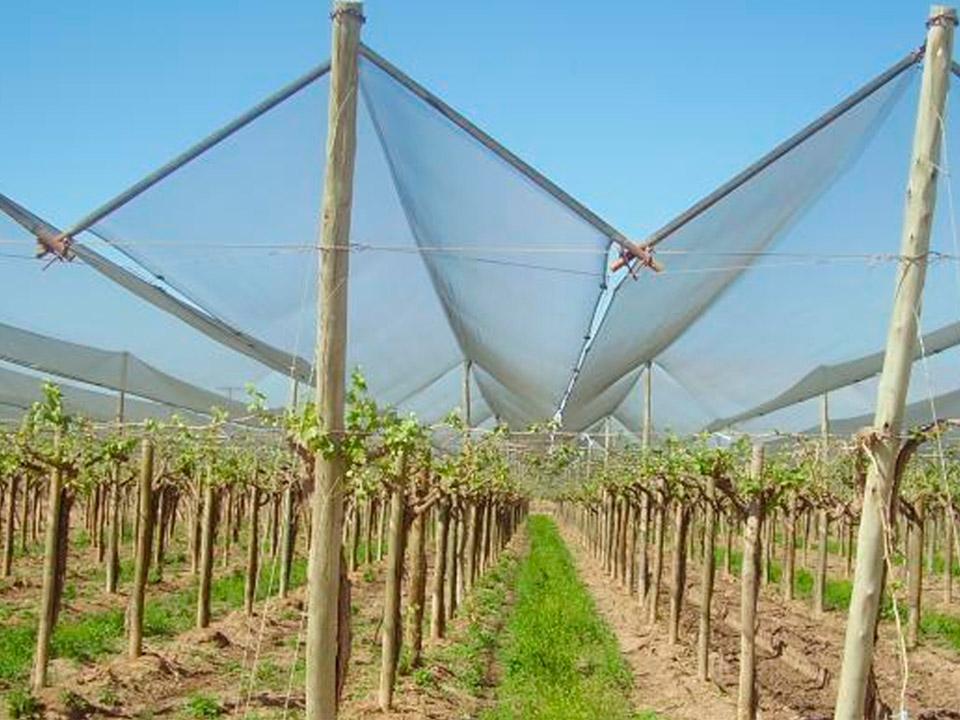 mallasombra para cultivos mexico